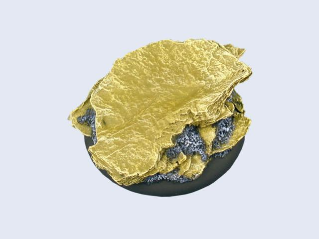 Shale Bases, WRound 50mm (1)