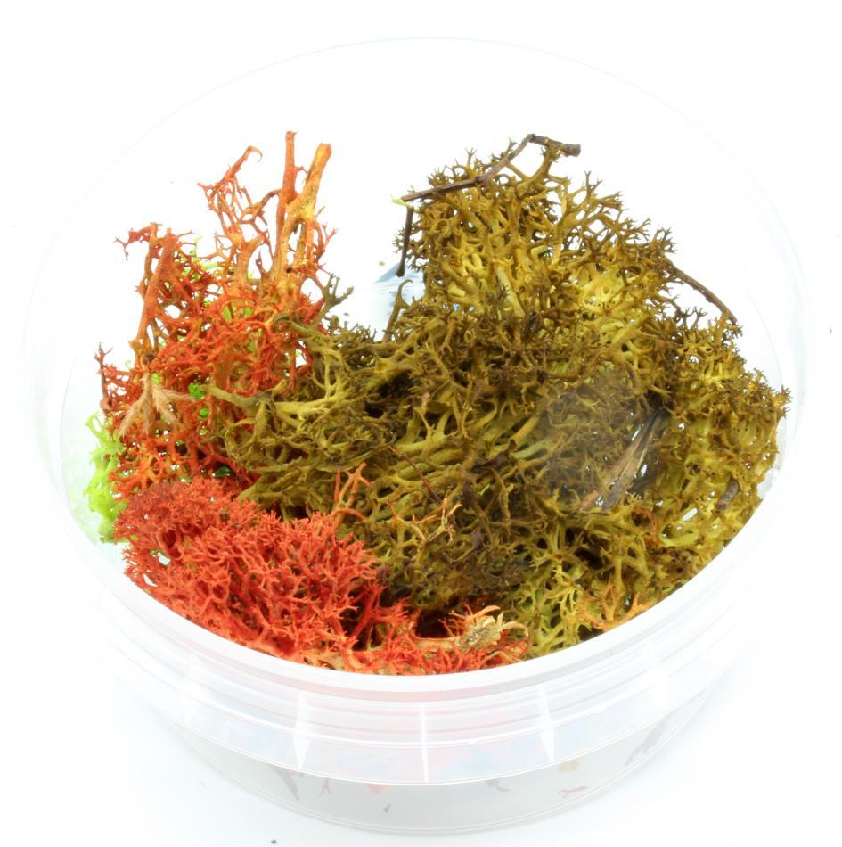Element Essentials: Autumn Shrub Tub