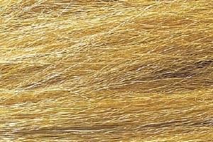 Harvest Gold Field Grass