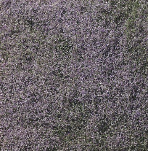 Purple Flowering Foliage