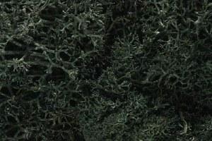 Dark Green Lichen